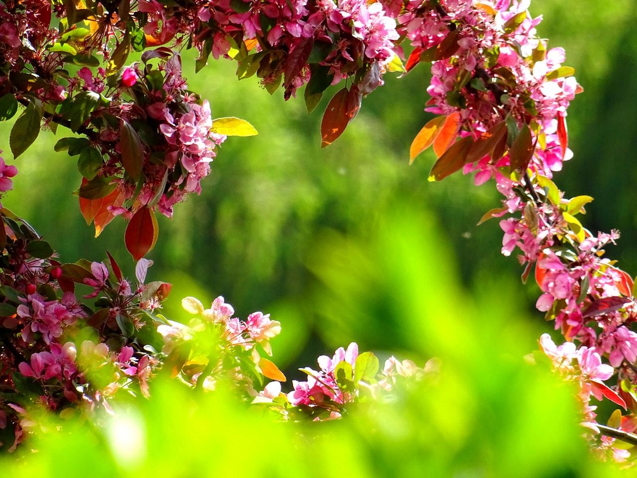 5 Wege, um Gartenpflanzer zu verwenden (plus Potcaping-Tipps)